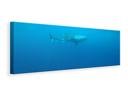Panoramic Canvas Print The Whale Shark