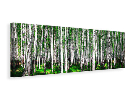 Panoramic Canvas Print Summerly Birch Forest