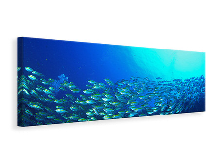 Panoramic Canvas Print Shoal Of Fish