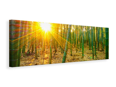 Panoramic Canvas Print Bamboos