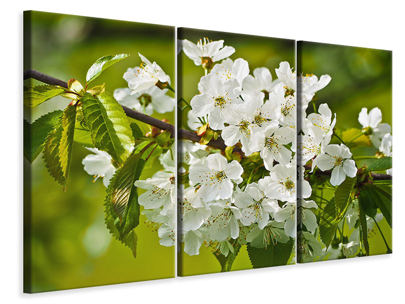 3 Piece Canvas Print White flowers in XL