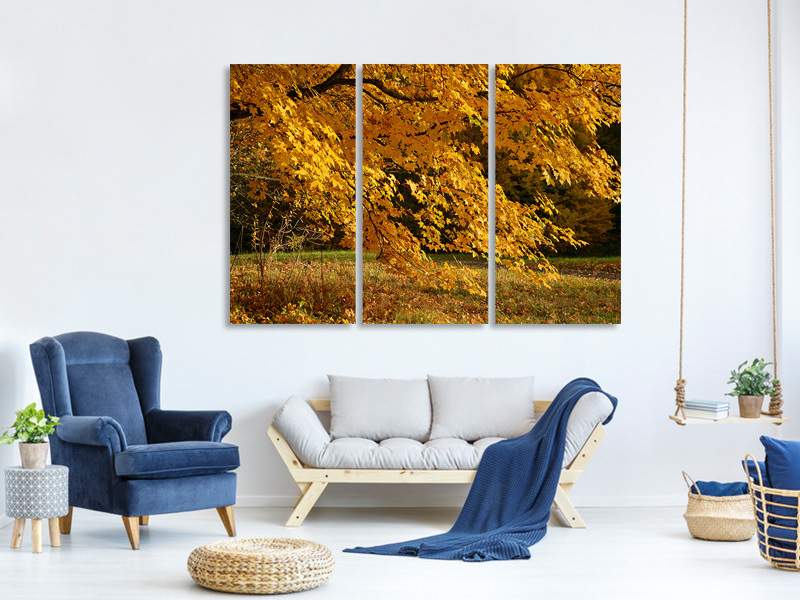 3 Piece Canvas Print The magnificent autumn tree