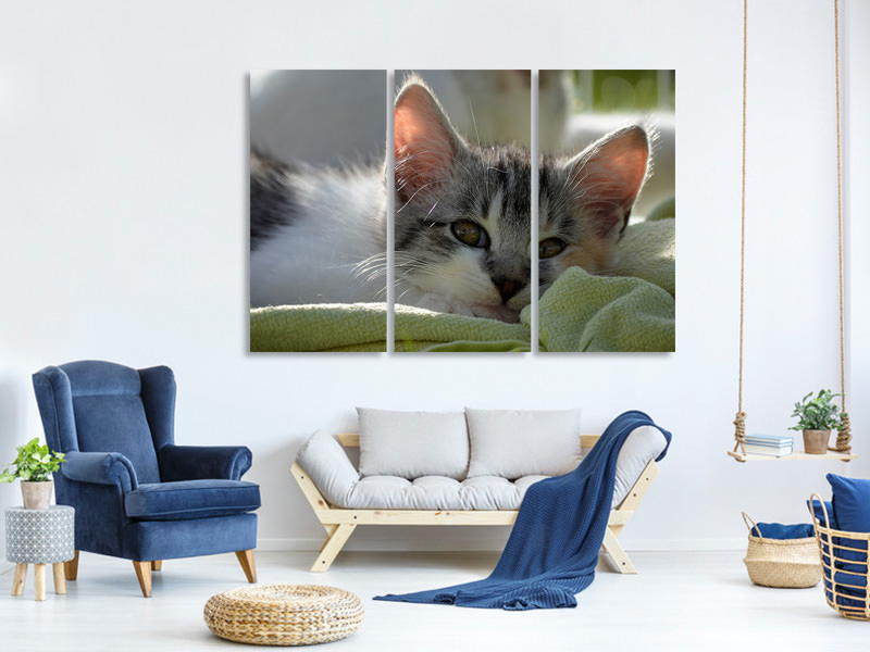 3 Piece Canvas Print In love with kitten
