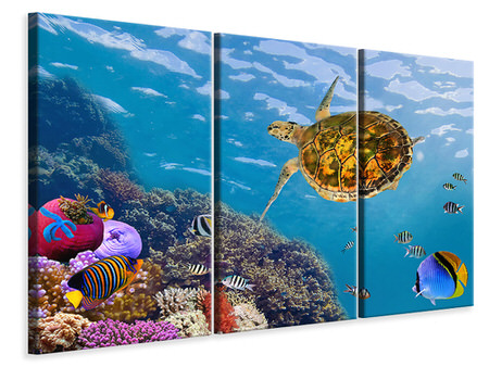3 Piece Canvas Print The Turtle