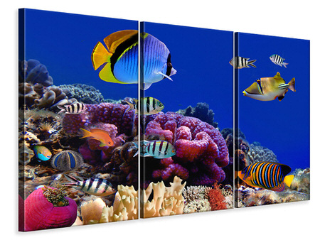 3 Piece Canvas Print World Of Fish