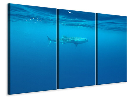 3 Piece Canvas Print The Whale Shark