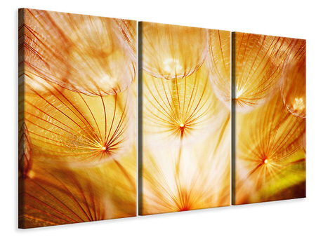 3 Piece Canvas Print Close Up Dandelion In Light