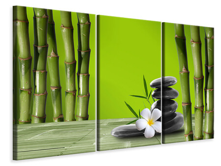 3 Piece Canvas Print Bamboo