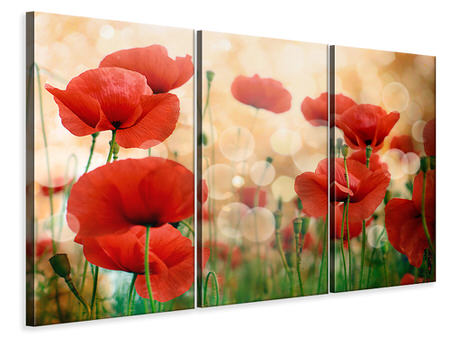 3 Piece Canvas Print The Poppy