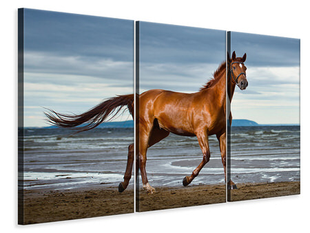 3 Piece Canvas Print A Thoroughbred At The Sea