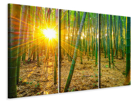 3 Piece Canvas Print Bamboos