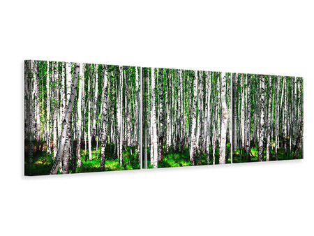 Panoramic 3 Piece Canvas Print Summerly Birch Forest