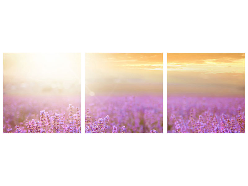 Panoramic 3 Piece Canvas Print Sunset In Lavender Field