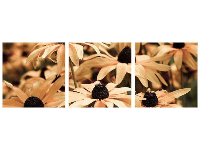 Panoramic 3 Piece Canvas Print Daisies In Sepia
