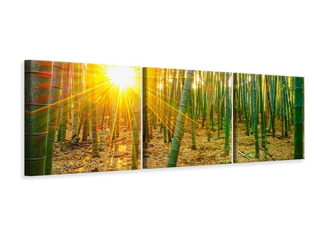 Panoramic 3 Piece Canvas Print Bamboos