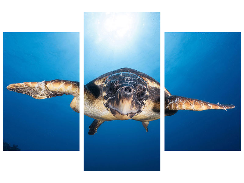 Tableau sur toile en 3 parties moderne Face To Face With A Hawksbill Sea Turtle