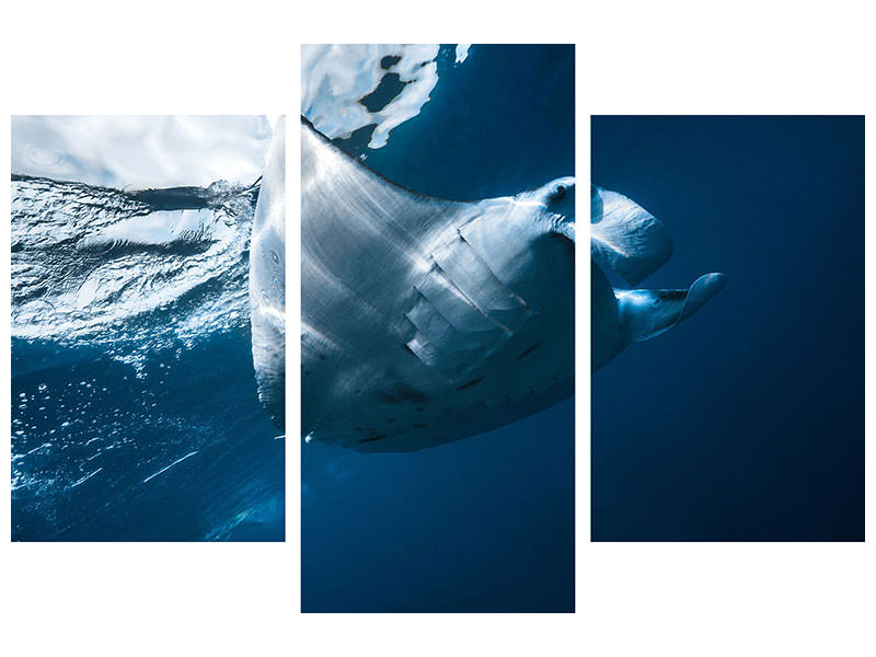 Modern 3 Piece Canvas Print Flying Manta Ray