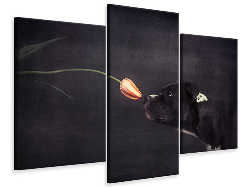 Modern 3 Piece Canvas Print First Approach - Hildegard And The Tulip
