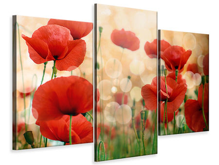 Modern 3 Piece Canvas Print The Poppy
