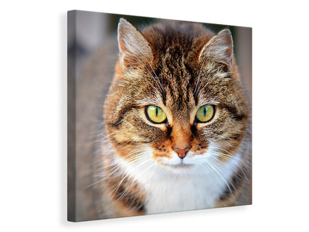 Canvas print Tiger cat