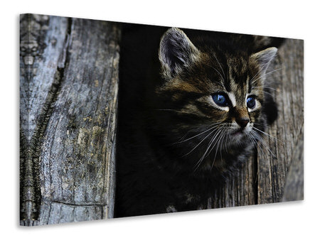 Canvas print Cats child