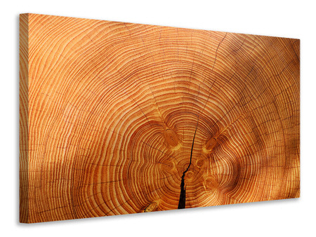 Canvas print tree rings
