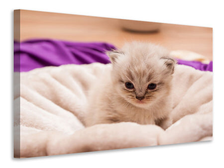 Canvas print Kitten to fall in love