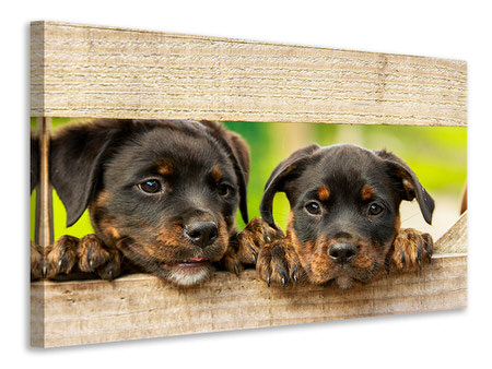 Canvas print 2 Rottweiler puppies