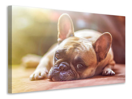 Canvas print Tired bulldog