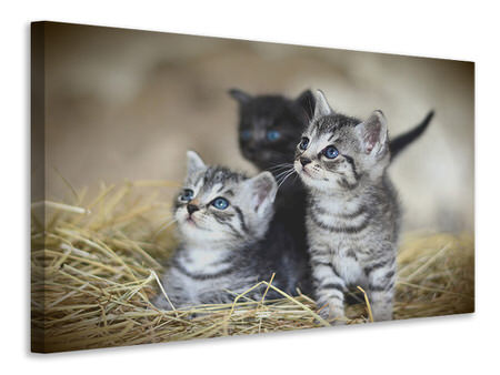 Canvas print Kitten trio