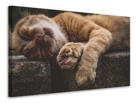 Canvas print Sleeping cat