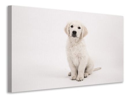 Canvas print Sweet Golden Retriever puppy
