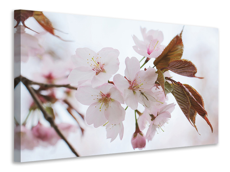 Canvas print Lovely Japanese cherry