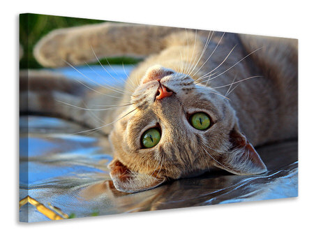Canvas print green eye