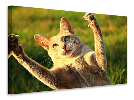 Canvas print Show the claws!