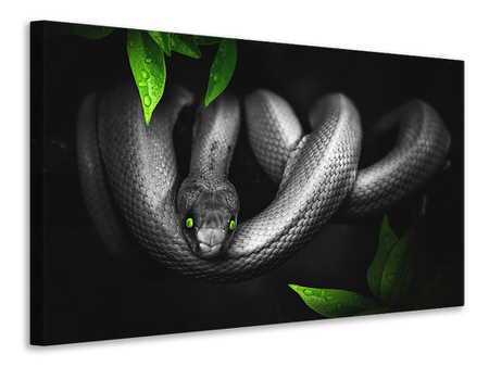 Tableau sur toile Attention serpent