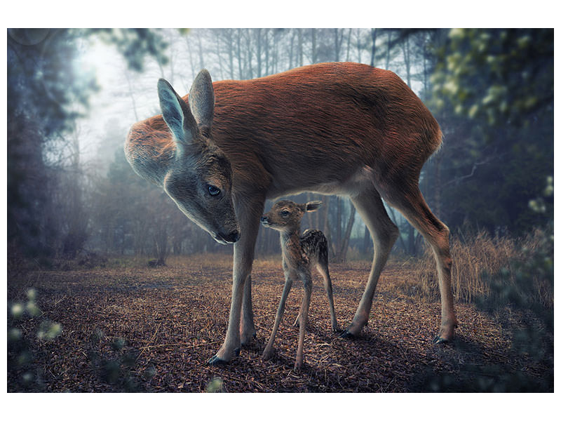 Canvas print Mother And Fawn