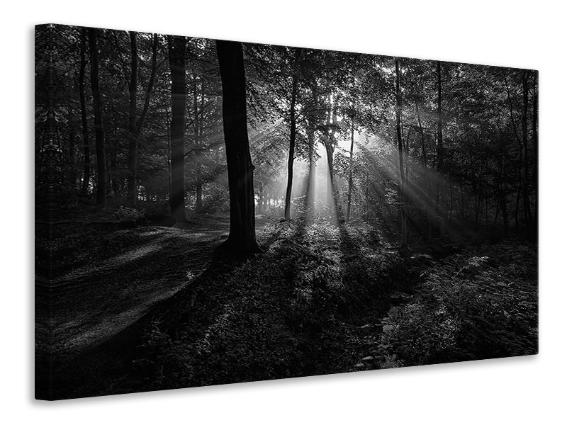 Canvas print A Sunny Morning