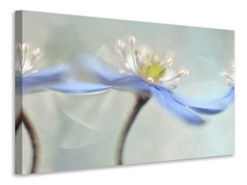 Canvas print Dancing Anemones