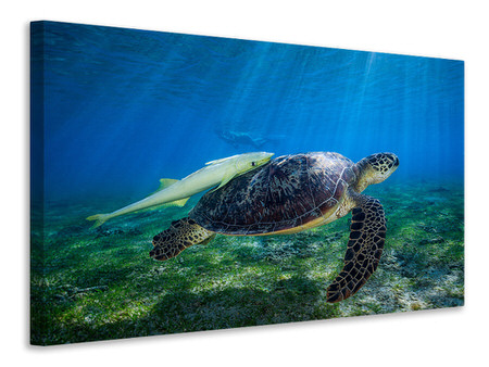 Leinwandbild Sea Turtle