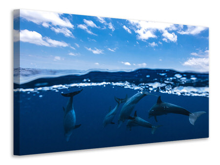 Leinwandbild Between Air And Water With The Dolphins