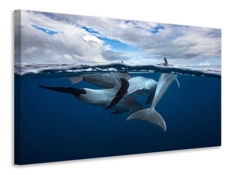 Canvas print Pod Of Dolphin At The Surface