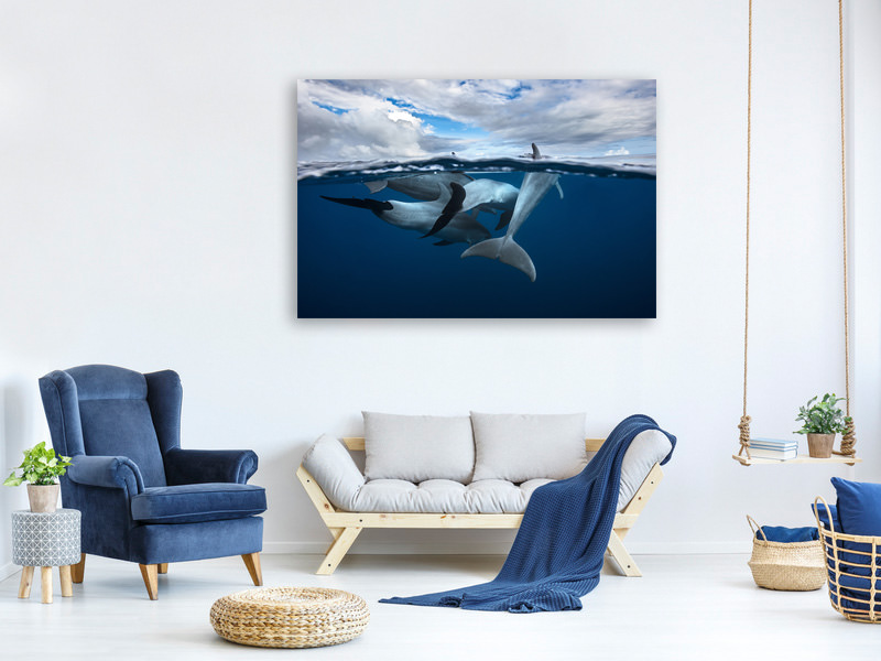 Tableau sur toile Pod Of Dolphin At The Surface