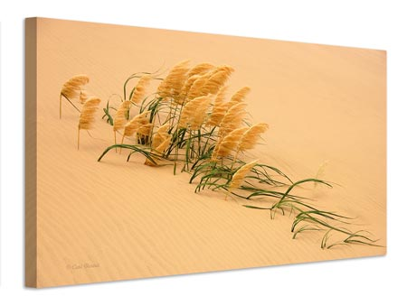 Canvas print Pampas Grass In Sand Dune