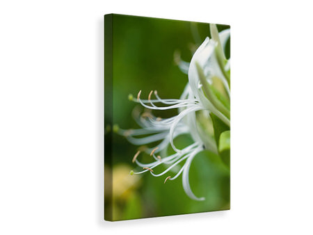 Canvas print Macro Florescence