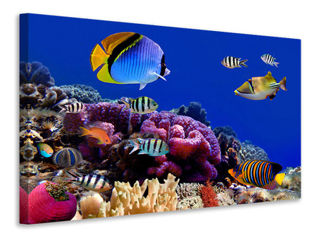 Canvas print World Of Fish