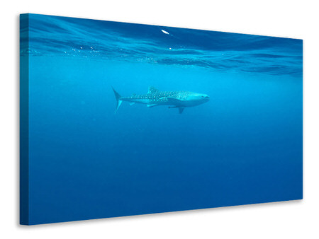 Canvas print The Whale Shark