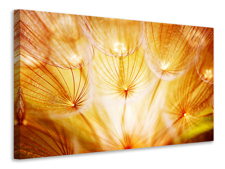 Canvas print Close Up Dandelion In Light