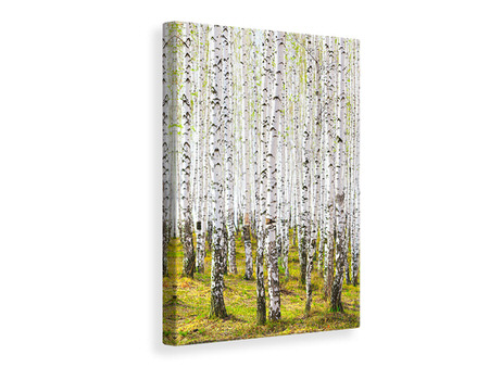 Canvas print The Birch Forest In The Spring