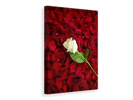Canvas print Bed Of Roses